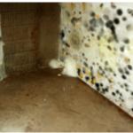 Riverside California area Mold Testing